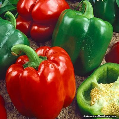 California Wonder Capsicum
