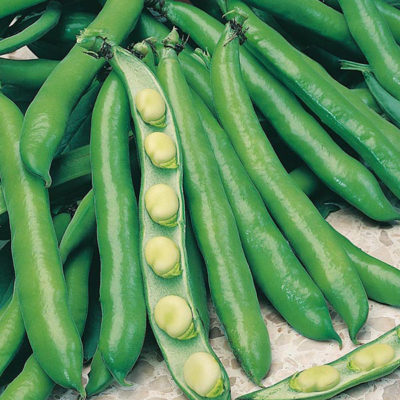 broad-beans-prolific