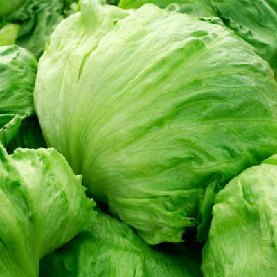 lettuce-great lakes